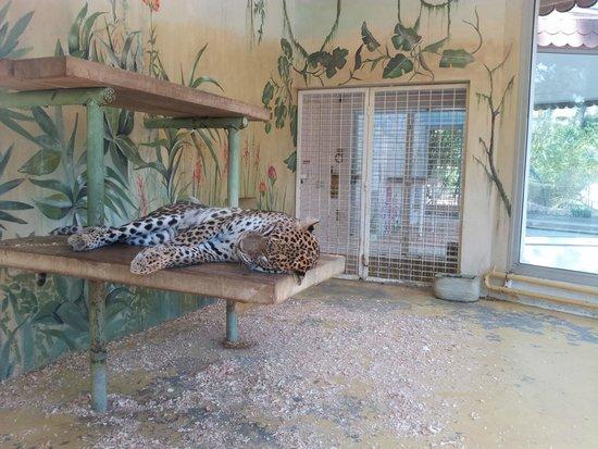 La Palmyre Zoo: Zoo La Palmyre