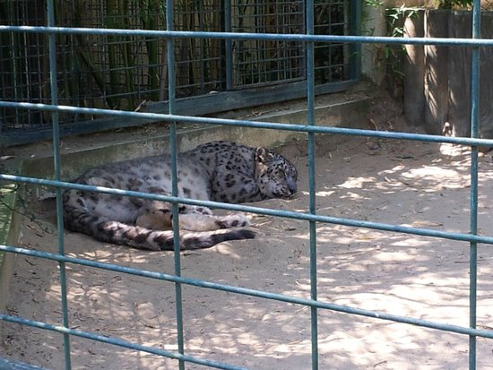 Zoo de la Palmyre: Zoo La Palmyre