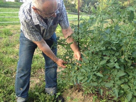 Kiloterdi Txokoa Ellauri: Cuidado de la huerta de Ellauri. Mata de tomates cherry.