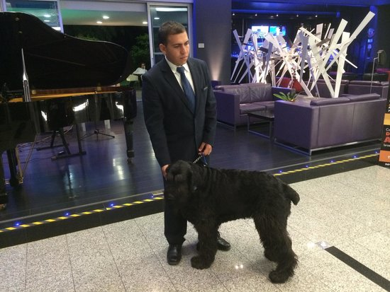 NH Collection Royal Medellin: Veja quem te recebe! Um cachorro que você ainda pode passear com ele mas redondezas e se diverti