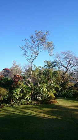 Idle & Wild : Garden view from terrace