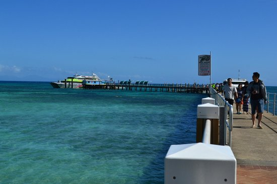 Green Island Resort: the jetty where the boats come in and fish feeding takes place