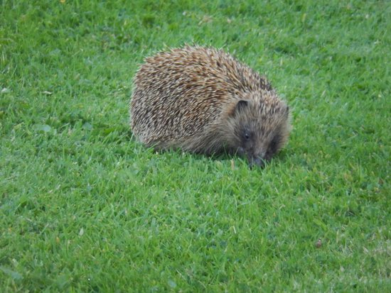 Moor View Bed and Breakfast: A very prickly guest!