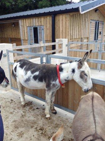 The Donkey Sanctuary: Donkey sanctuary