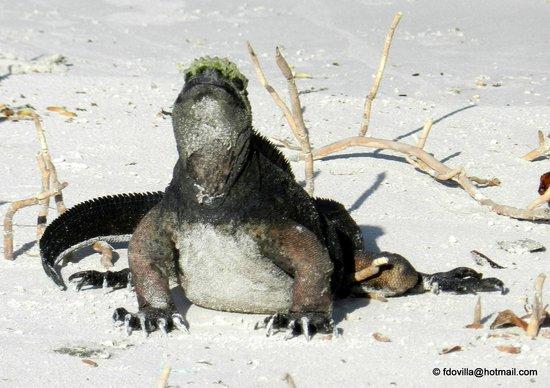 Galapagos Beach at Tortuga Bay: PLAYA BAHIA TORTUGAS - ISLAS GALAPAGOS - MAYO 2014