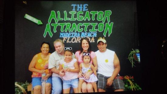 The Alligator Attraction : Gators!!