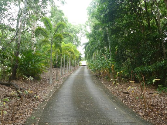 Driveway leading up to the Mai Tai Resort