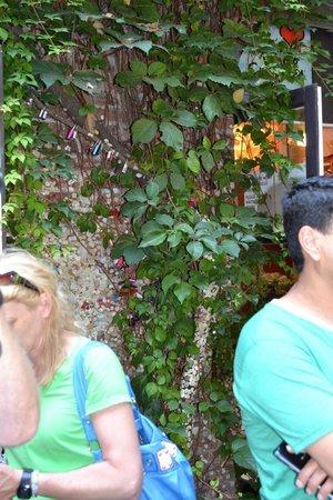 Casa di Giulietta: Chwing-gum addirittura sul tronco: che vergogna!