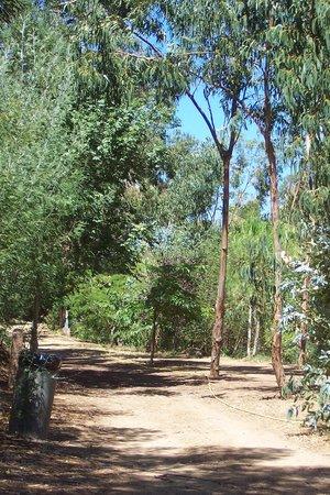 Camping Bella Vista : eucalipti