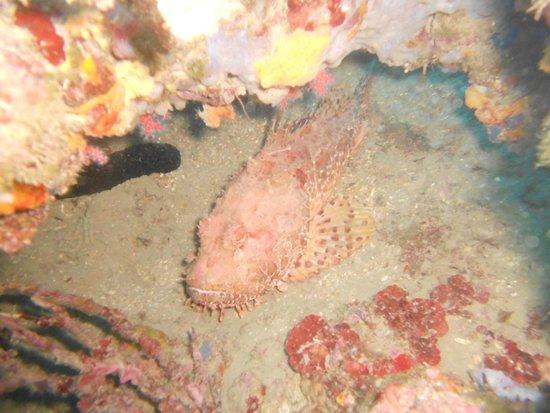 Hotel Les Illes : Cueva del delfin