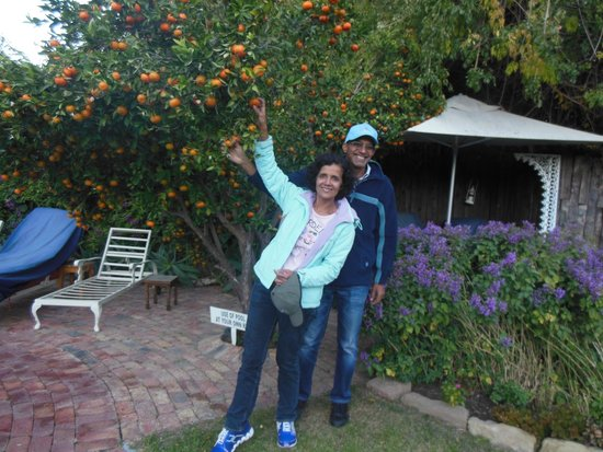 La Pension Guest House: There are several such orange trees in the garden.
