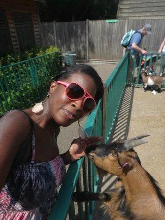 Paradise Wildlife Park: Goats