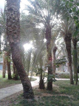 Zita Beach Resort: Chambre-2013-Vue-Jardin