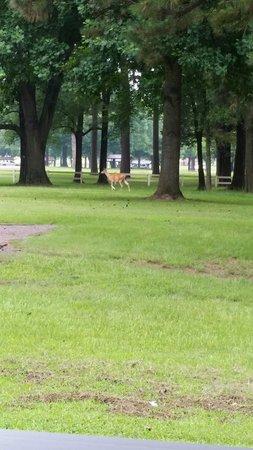 """Old Post Park: Deer in ur """"backyard"""""""