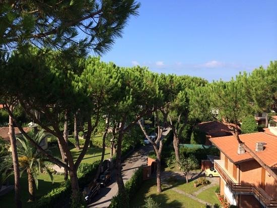 Hotel Bijou: view from the suite, interesting height between the crowns of the pine trees.