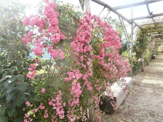 Giardino della Rosa: Rose