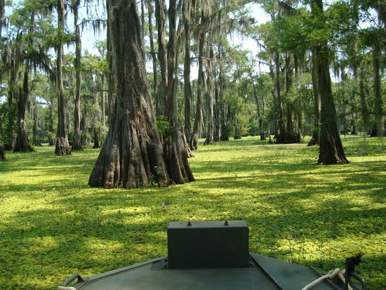 Caddo Outback Backwater Tours: We actually went through this vegetation!  Terrific experience!