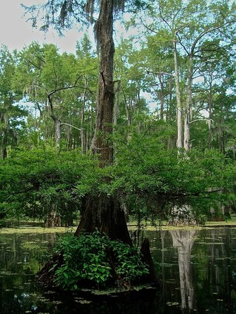 Caddo Outback Backwater Tours: Close-up in the beauty of Caddo Lake