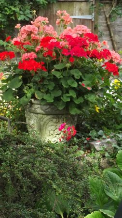 The Clarence House Hotel: well tended garden