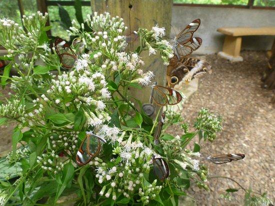 Green Hills Butterfly Ranch : Glass butterflies
