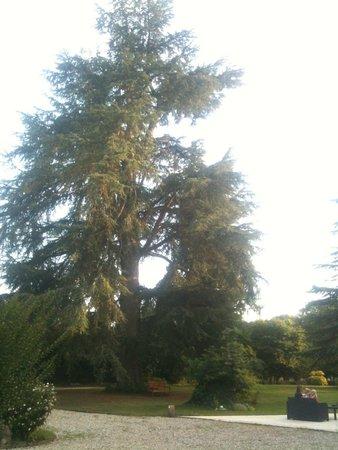 Chateau la Mothe Charente : Apero en terrasse