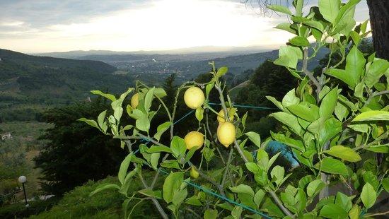 Casale Fontibucci: Limonen