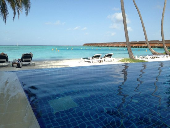 Meeru Island Resort & Spa : Infinity Pool