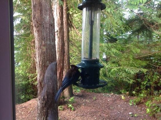 Bostrom's B&B On Little Beach Bay: Very busy bird feeder outside the window