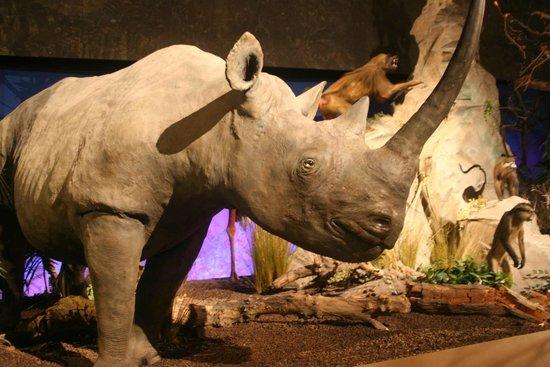 Museum of Natural History (Museum d'Histoire naturelle): grande galerie