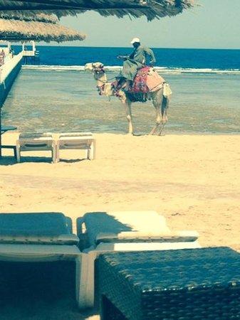 Rixos Sharm El Sheikh: beach