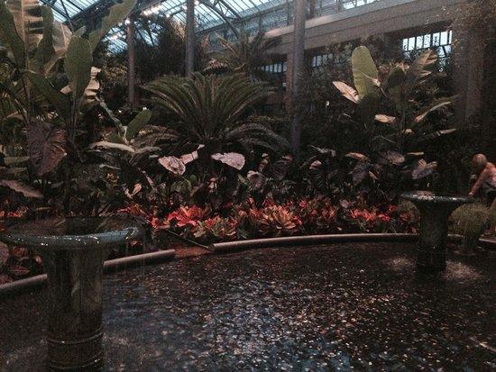 Longwood Gardens: Looks like rainforest