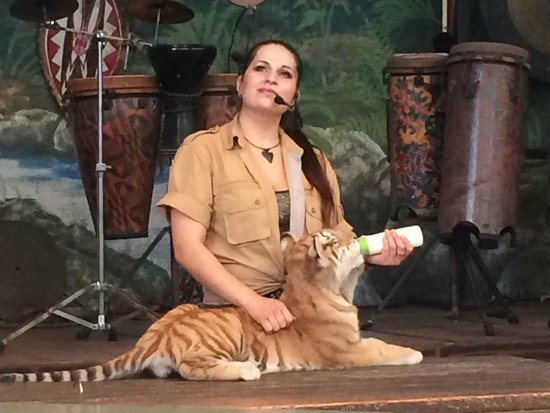 Jungle Island : Liger (lion and tiger offspring) and trainer