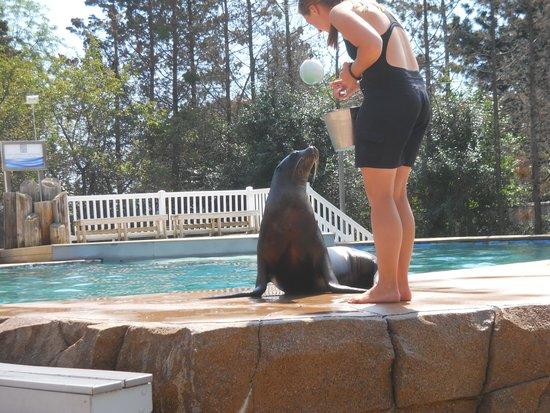 Milwaukee County Zoo: Sea lion show