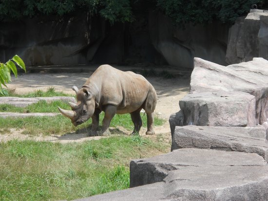 Milwaukee County Zoo: Rhino