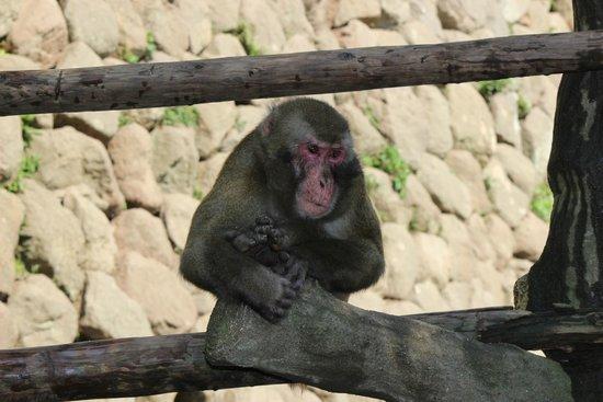 Takasakiyama Natural Zoo: 貫禄