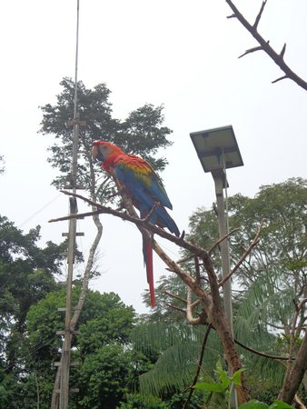 Otorongo Expeditions Jungle Lodge : Macaw at the lodge.