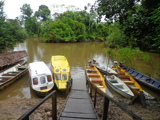 Otorongo Expeditions Jungle Lodge : The boats used for excursions.
