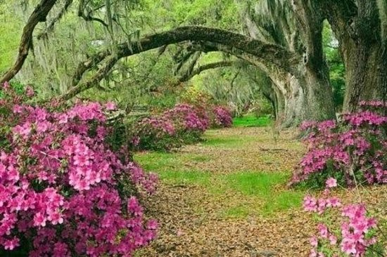 Middleton Place: Majestic gardens