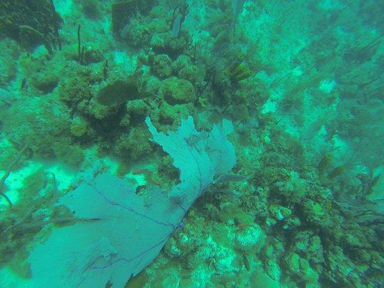 Dressel Divers : 1