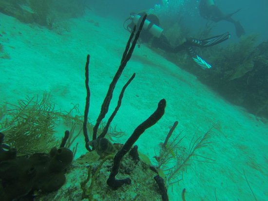 Dressel Divers : 4