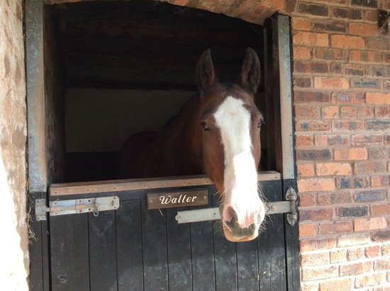 Red Rail Farm: The stables next door