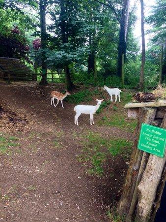 Mountfitchet Castle: Wildlife