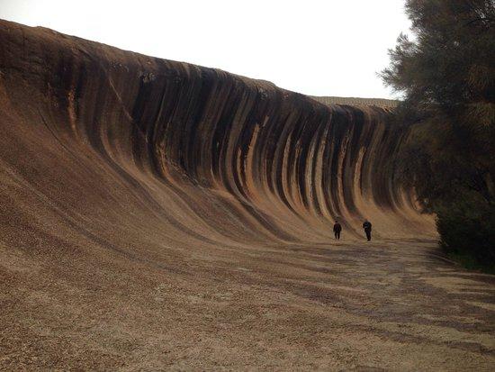 Wave Rock: Wonderful creatures!