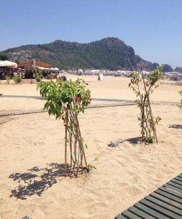 Miray Hotel: The beach opposite the hotel.