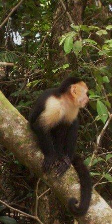 Safari Adventures : The rainforest