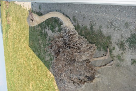 The Wilds: Lola the Ostrich