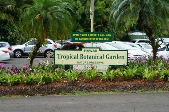 Hawaii Tropical Botanical Garden : Parking lot across from the gardens