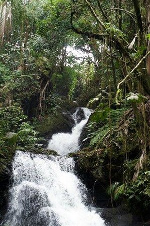 Hawaii Tropical Botanical Garden : Waterfalls on one of the paths