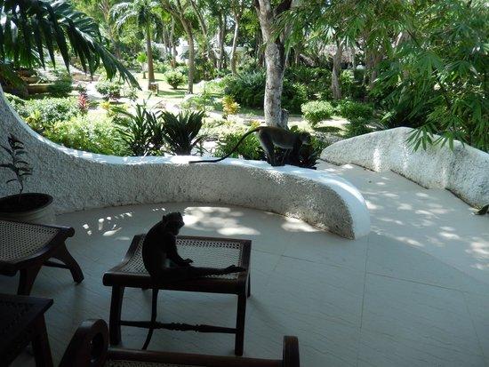 Ocean Village Club: Monkeys on terrace