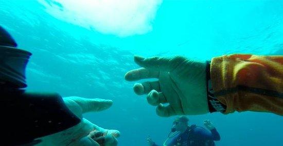 Keys Diver Snorkel & Scuba: Underwater